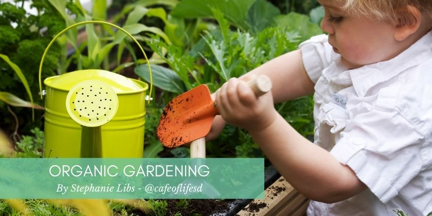 How To Start An Organic Garden Dr Stephanie Libs Blog - Cafe Of Life San Diego